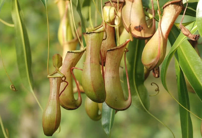 گیاهان عجیب و غریب و شگفت انگیز