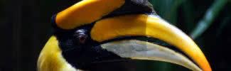 10 birds with amazing beaks