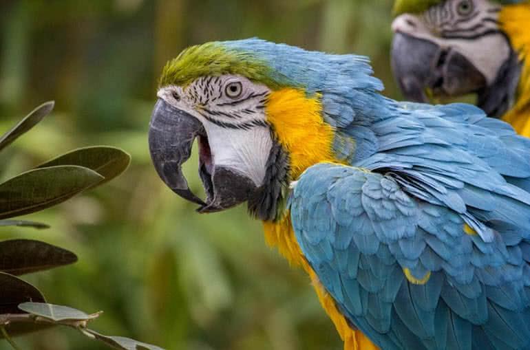 most beautiful parrots