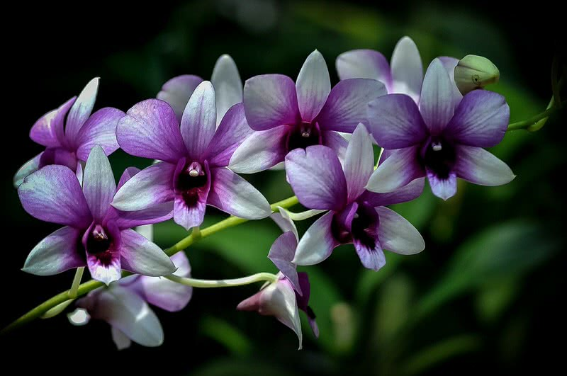 Orchids that look like animals 11